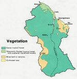 Guyana Vegetation Map