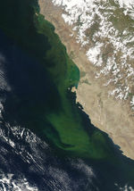 Algal bloom off Peru