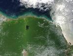 Vegetation hot spot over Suriname