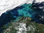 Phytoplankton bloom off Norway