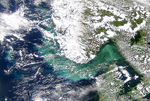 Phytoplankton Bloom in Skagerrak Intensifies