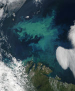 Phytoplankton bloom in the Barents Sea