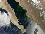 Phytoplankton bloom in Gulf of California, Mexico